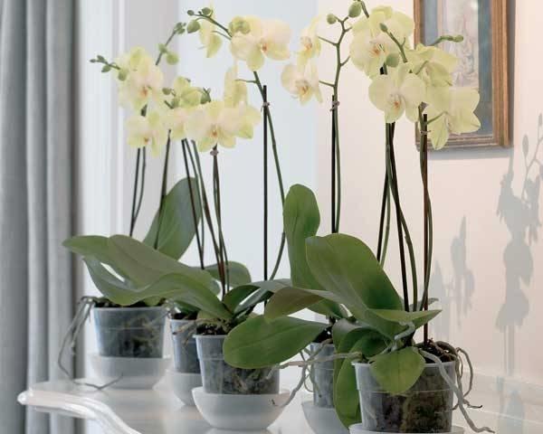 come innaffiare le piante in estate 4 vasi di orchidee
